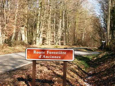 Perseigne Forest